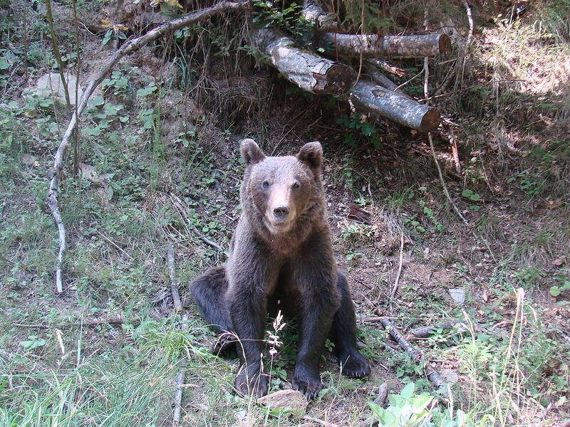Kinderweltreise ǀ Rumänien - Tiere & Pflanzen