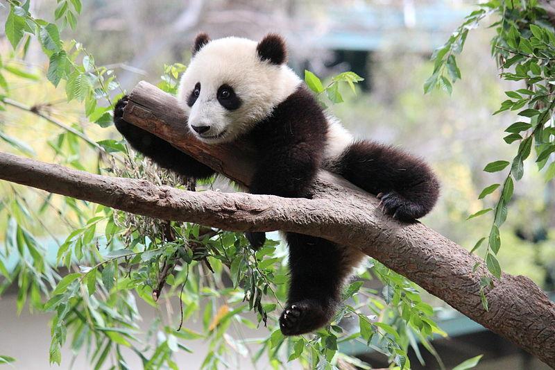 Kinderweltreise ǀ China Tiere Pflanzen