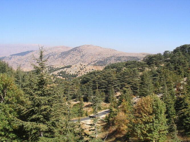 Wälder, Sträucher, Libanon